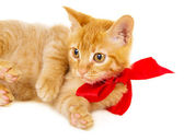 Young redhead kitty is on the floor — Stock Photo