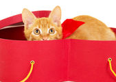 Young redhead kitty sits in a box — Stock Photo