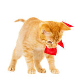 Young redhead kitty — Stock Photo