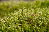 Bright green moss — Stock Photo