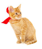 Red cat is sitting on the floor in the red ribbon — Stock Photo