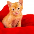 Red kitten lays on a pillow — Stok fotoğraf