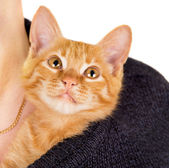 Grown man hold a red-haired kitten — Foto de Stock