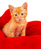 Red kitten lays on a pillow — Stock fotografie