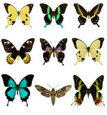 Set of beautiful butterflies — Stock Photo