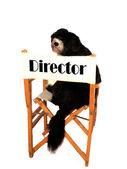 Perro director — Foto de Stock