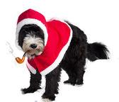 Père Noël chien — Photo