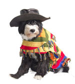 Mexican dog — Stock Photo