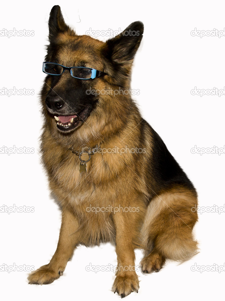 German Shepherd with eyeglasses blue — Stock Photo #15346399