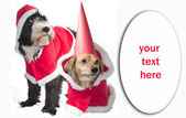 Santa claus dog — Stock Photo