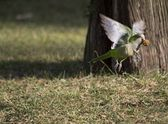 Parrot fly — Stock Photo