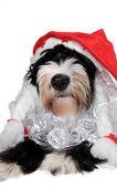 Noel köpek — Stok fotoğraf