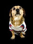 Köpek bakmak — Stok fotoğraf