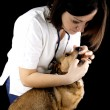 Veterinary — Stock Photo #19730475