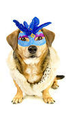 Dog and mask — Stock Photo