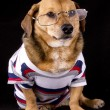 Eyeglasses dog — Stock Photo