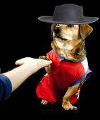 A little dog — Stock Photo