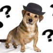 Stock Photo: Dog puzzled