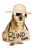 Blind dog — Stock Photo