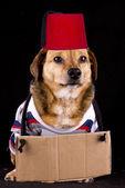 Help dog — Stock Photo