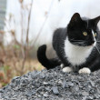 Black and white cat sits on gravel — Stock Photo