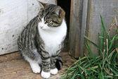 Striped cat in doorway — Stock Photo