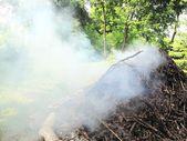 从营地火烟 — 图库照片
