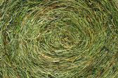Rolled Bale of Hay — Stock Photo