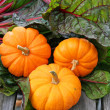 Miniature decorative pumpkins and swiss chard — Stock Photo