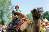 A boy riding on camel. — Stock Photo