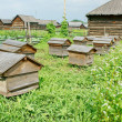 Hives in apiary. — Stock Photo #17176477