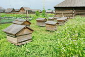 Hives in the apiary. — Stock Photo