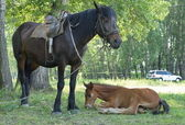 A horse with a foal on the grass. — Stock Photo