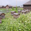 Hives in apiary. — Stock Photo #18632387
