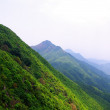 High mountain with green tree — Stock Photo