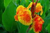 Closeup of plants at spring — Stock Photo