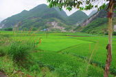 Tea field of Guilin City at south china — Stock Photo