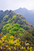 Spring at high mountain of china — Stock Photo