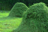 Hay in stacks in a summer rural landscape — Stockfoto