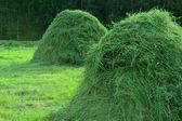 Fieno in pile in un paesaggio rurale di estate — Foto Stock