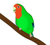 Vector illustration green parrot Lovebird on a white background — Stock Vector