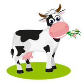 Cute black and white cow eating daisy, isolated on white vector illustration. — Stock Vector