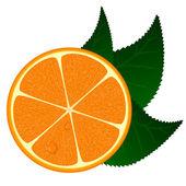 Ilustración vectorial de naranja fresca — Vector de stock