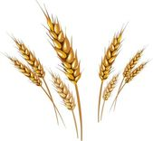 Wheats — Stock Vector