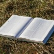 Stock Photo: Book on hay