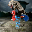 Stock Photo: Weimaraner jumping over playground equipment Weimaraner jumping over playground equipment