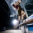 Weimaraner jumping of urbbench — Stock Photo #15346103