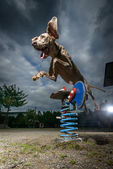 Dramatic view of jumping Weimaraner dog — Stock Photo