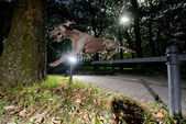 Weimaraner leaping over a metal bar — Stock Photo