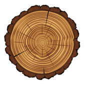 Cross section of tree stump isolated on white background, vector Eps 10 illustration. — Stock Vector